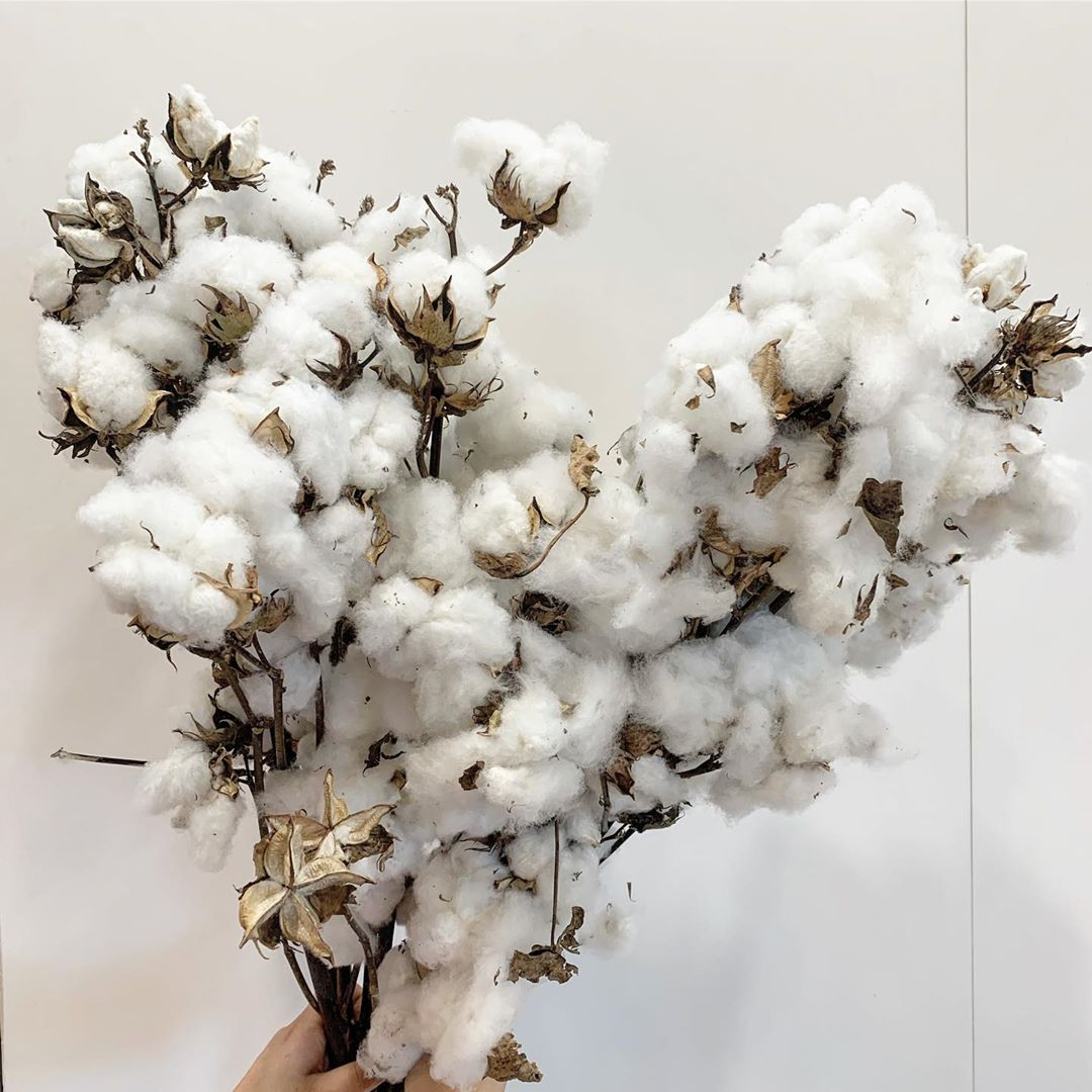 the cotton